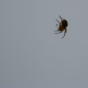 Kde mám pavučinu?
