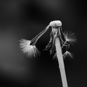 Odviate vetrom