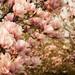 Záhradné kvetivstvo