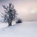 Zimní sen