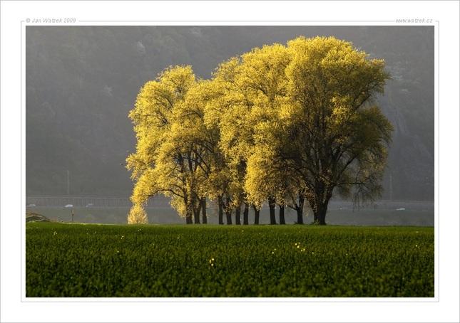 Zlaté jaro