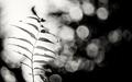 magický život rastlín . .