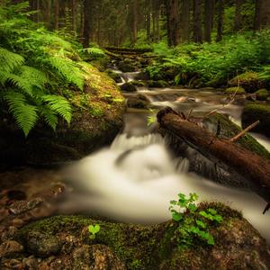 hlboko v lese . .