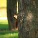 Zvedavá veverica