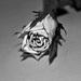 Ružička ♥