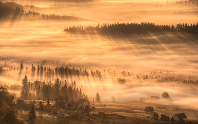 """""""Golden morning"""""""