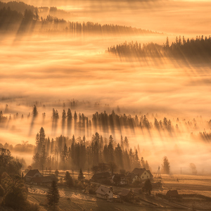 """Golden morning"""