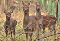 Follow Deers