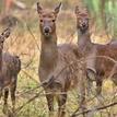 Follow Deers