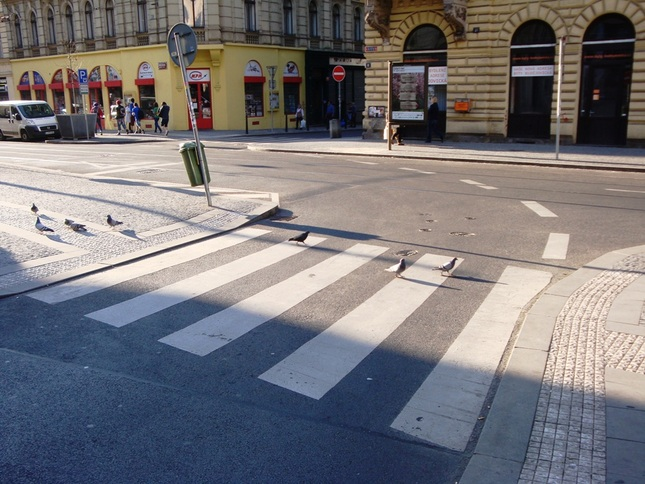 Crosswalk pigeons