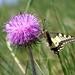 motýľ a kvet