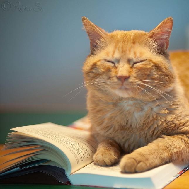 Chvíľka s knihou ...