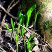 prichadza jar