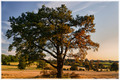 strom 2