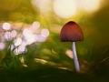 v rozprávkovom lese V
