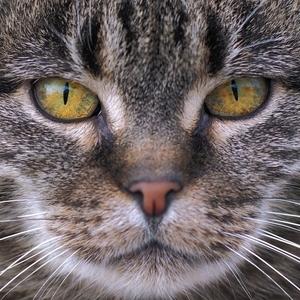 oči lovca