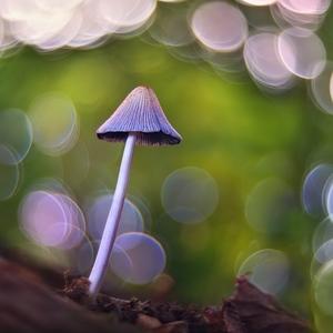 v rozprávkovom lese II