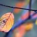pastelová jeseň