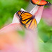 Butterfly effect po druhé