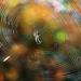 jeseň v sieti