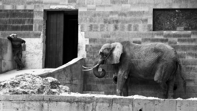 sloni muz