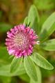 kvet z blizka