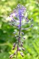 fialovo modre