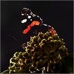 ...a motýlik vykukol