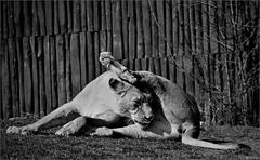 Zvieratá v zajatí XIV