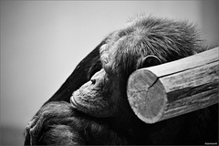 Zvieratá v zajatí III