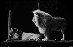 Zvieratá v zajatí VI
