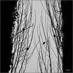 Medzi dvoma stromami