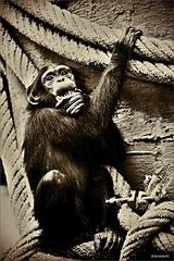 Zvieratá v zajatí XXV