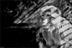 Zvieratá v zajatí XVI