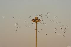 Ostrov vtákov