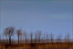 Impressionizmus na jazere