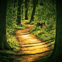 Kľukatá lesná cestička