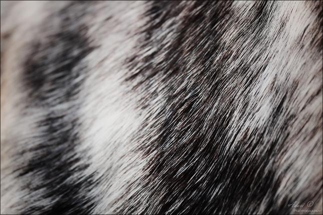 Horse hair 2