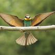Včelarik zlatý