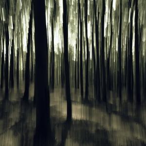 inpresionizmus v lese...