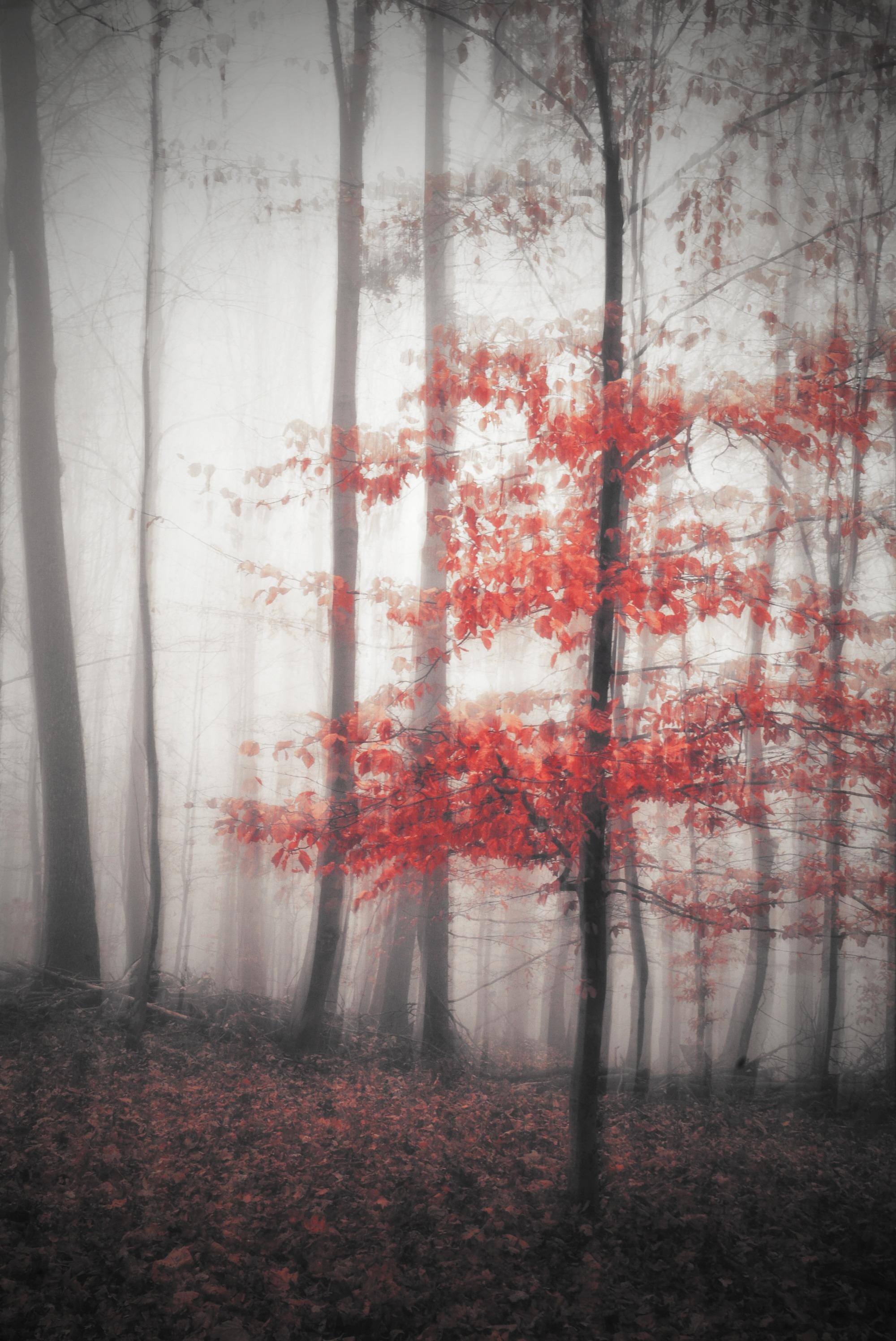 jesenná impresia..