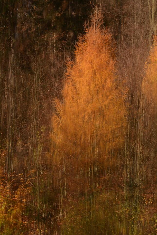 jesenný impresionizmus...