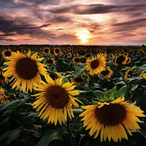 letné slnká...