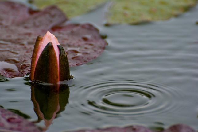 Lekno v daždi