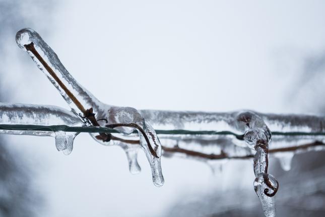 Zamrznutý konár