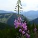 kvet v Zázrivej