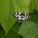 B/W butterfly