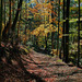 .... babie leto v lese...