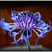sviezost kvetu