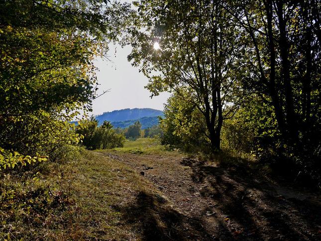 prechadzka  lesom konci
